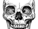 Drawing Skull Crossbones 698 Best Skulls and Bones Images In 2019 Drawings Skull Art Skulls