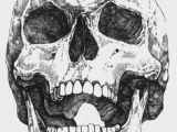 Drawing Skull Model 997 Best Skulls In Art Images In 2019 Skulls Sculpture Skeletons