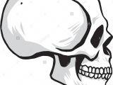 Drawing Skull Side View Seitenansicht Oder Profil Stockfotos Seitenansicht Oder Profil