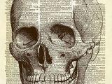 Drawing Skulls Book Human Skull Dictionary Art Print Smash and Scrap Art Dictionary