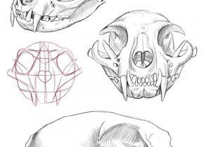 Drawing Skulls Tutorial Cat Skull Anatomy Google Search Cat Tattoo Final Drawi