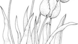 Drawing Stylized Flowers 28 Best Line Drawings Of Flowers Images Flower Designs Drawing