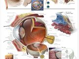 Drawing the Eye socket 7 Amazing Facts About Your Eyes Infographic Eyes Medical Drawings