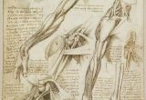 Drawing Things From the Mind is Called A Rare Glimpse Of Leonardo Da Vinci S Anatomical Drawings Art Da