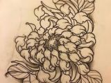 Drawing Traditional Flowers 10 Best Chrysanthemum Drawing Images Botanical Illustration