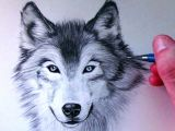 Drawing with Jazza Eyes How to Draw A Wolf Youtube