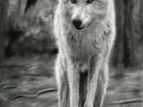 Drawing Wolf Backgrounds 180 Best Wolf Drawings Images Drawing Techniques Drawing