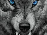 Drawing Wolf Backgrounds Download Angry Wolf Wallpaper by Georgekev now Browse Millions Of