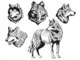 Drawing Wolf Backgrounds Sketch Drawing Wolf Silhouette Set On White Background Grafika