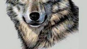 Drawing Wolf Hurt Die 73 Besten Bilder Von Wolf Wolf Drawings Draw Animals Und Drawings