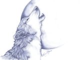 Drawing Wolf Side View Free Wolf Drawings Download Free Clip Art Free Clip Art On Clipart