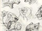 Drawing Wolf Tumblr Pin by Tung Ngo On Dp Animal Creature Pinterest Animal