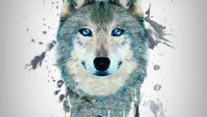 Drawing Wolf Wallpaper Fractal Wolf Wallpaper by S 0d Free On Zedgea