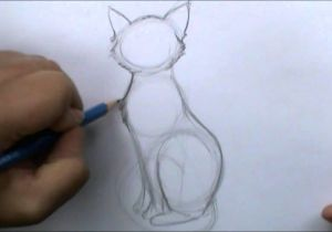 Drawing Wolves for Beginners How to Draw A Basic Cat Sitting Youtube
