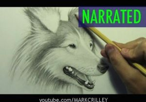Drawing Wolves for Beginners How to Draw A Dog Narrated Step by Step Youtube