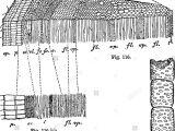 Drawing Xylem and Phloem Xylem and Phloem Stockfotos Xylem and Phloem Bilder Seite 4 Alamy