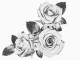 Drawings Of 3 Roses 41 Best Black and White Roses Images Pencil Drawings Paintings