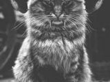 Drawings Of A Evil Cat 62 Best Demon Cats Images Funny Animals Hilarious Jokes