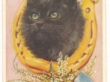 Drawings Of A Evil Cat Lucky Black Cat Postcard No 5249 by Valentine Horseshoe White