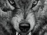 Drawings Of A Wolf Tattoo 14 Awesome Wolf Tattoos for Women and Men Wolf Tattoos Wolfe