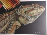 Drawings Of Bearded Dragons 1375 Best Bearded Dragons Images In 2019 Bearded Dragon Lizards