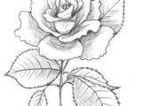 Drawings Of Beautiful Roses 175 Best Flower Drawings Images In 2019 Beautiful Flowers