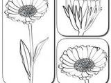 Drawings Of Calendula Flowers 54 Best 3 Flowers Images Beautiful Flowers Flower Names Flower