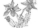 Drawings Of Columbine Flowers 1412 Nejlepa A Ch Obrazka Z Nasta Nky Flower Drawings Drawings