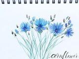 Drawings Of Corn Flower Cornflower Artbybianca I Painted This Cornflower Following Bianca S