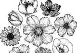Drawings Of Cosmos Flowers 11 Best Hibiscus Drawing Images In 2019 Hibiscus Drawing Hibiscus