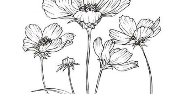 Drawings Of Cosmos Flowers 3 249 Cosmos Flower Cliparts Stock Vector and Royalty Free Cosmos