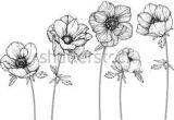 Drawings Of Cosmos Flowers 864 Best Flower Drawing Images In 2019 Drawing Flowers Flower