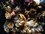 Drawings Of Dead Roses 73 Best Dead Flowers Images Flower Art Botanical Art Dying Flowers