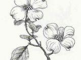 Drawings Of Dogwood Flowers 24 Best Flora Dogwoods Images Dogwood Flowers Dogwood Flower