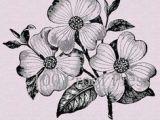 Drawings Of Dogwood Flowers 46 Best Dogwood Flowers Images Dogwood Flowers Flowers Blanco Y