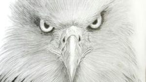 Drawings Of Eagle Eyes 221 Best Eagle Sketches Images Eagle Drawing Eagle Painting