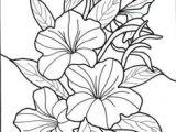 Drawings Of Exotic Flowers 215 Best Exotic Flowers Images Exotic Flowers Beautiful Flowers