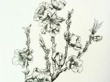 Drawings Of Flower Buds Nectarine Blossoms Lots Of Flower Buds at the Moment Hoping for A