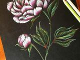 Drawings Of Flower Buds Peony Art Peonies Drawing Flower Pencil Art Coloured Pencil