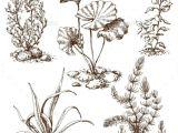 Drawings Of Flower Plants Sketch Of Underwater Plants Flowers Plants Nature Tattoo