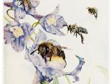 Drawings Of Flowers and Bees Pin by Cynthia Bogart On Bee Illustrations Bee Art Bee Art