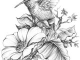 Drawings Of Flowers and Hummingbirds Hummingbird E E Done for A Book Cover A4 Size Hb 3b 6b Acrylic