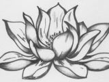 Drawings Of Flowers Lotus 9 Lotus Flower Drawing 45×30 Cm A C 2008 by Katarina Svedlund