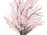 Drawings Of Flowers On Trees Commission Cherry Tree In 2019 Photos Pinterest Drawings