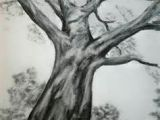 Drawings Of Flowers On Trees Easy Charcoal Drawings Flowers Bing Images Shading Drawings