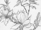 Drawings Of Flowers On Trees From A Selection Of Henny S Magnolia Drawings and Sketches