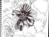 Drawings Of Flowers Pen 1412 Nejlepa A Ch Obrazka Z Nasta Nky Flower Drawings Drawings
