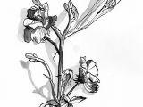 Drawings Of Flowers Pen Sixto Juan Zavala Pen Ink Flowers