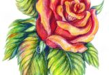 Drawings Of Flowers Pretty 25 Beautiful Rose Drawings and Paintings for Your Inspiration