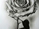Drawings Of Flowers Realistic Flowers Flowers Drawings Pencil Drawings Realistic Pencil Drawings